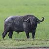 1804_Tanzania11_081