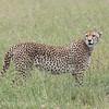 1804_Tanzania14_351