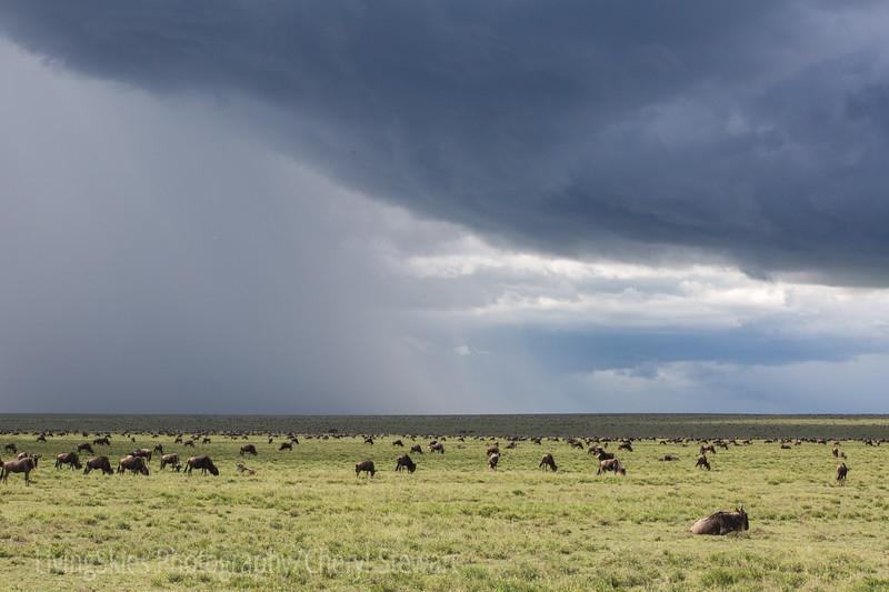 1804_Tanzania1_988