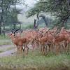 1804_Tanzania1_038