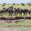 1804_Tanzania1_959