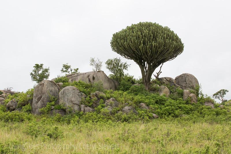 1804_Tanzania4_089