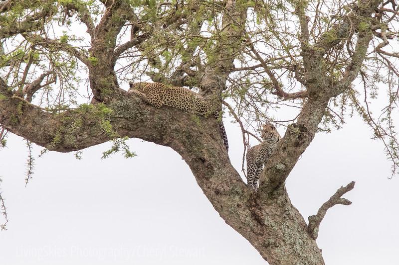 1804_Tanzania14_146
