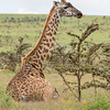 1804_Tanzania9_666