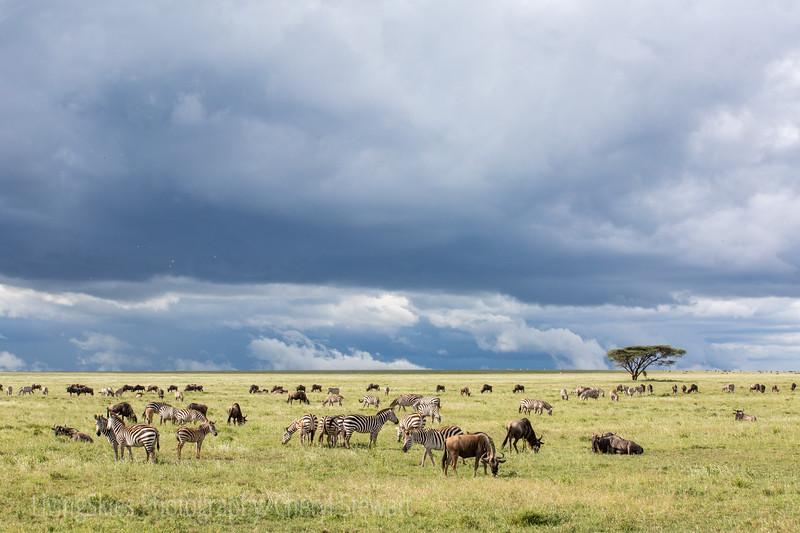 1804_Tanzania4_004