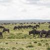1804_Tanzania1_442