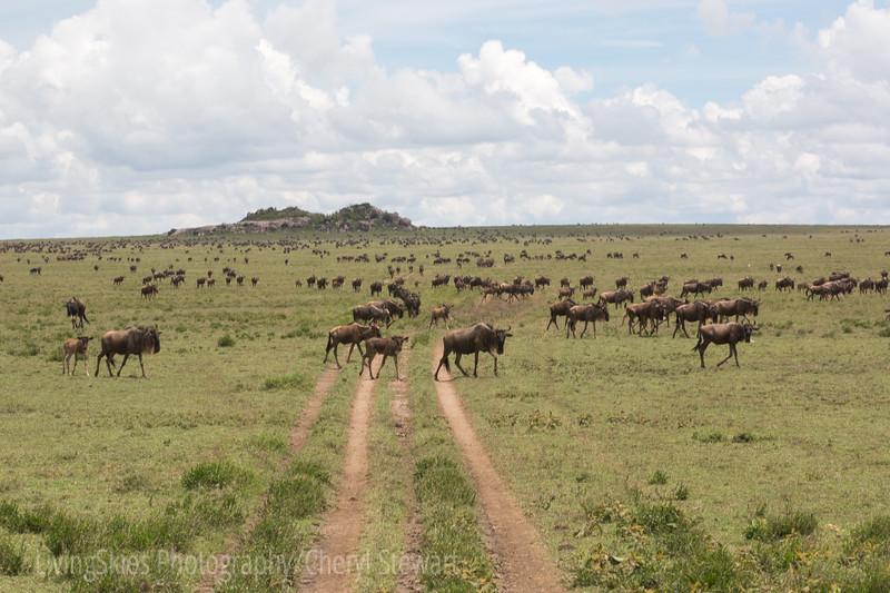 1804_Tanzania1_769