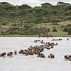 1804_Tanzania4_1160