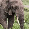 1804_Tanzania4_1294
