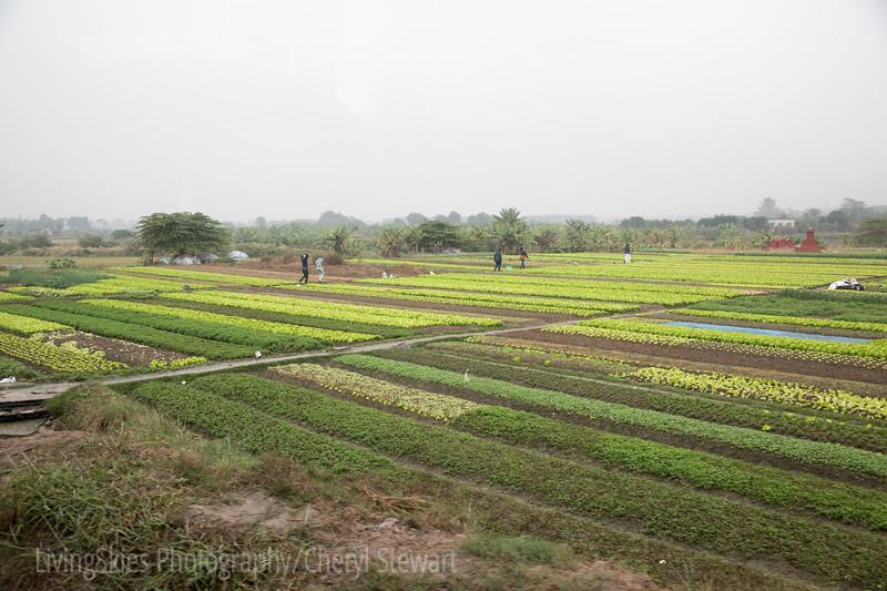1801_Vietnam_399
