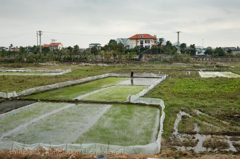 1801_Vietnam_119