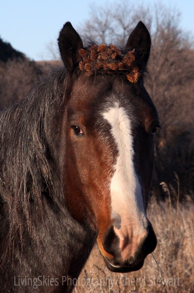Bad Hair Day, Wild horse, TRNP