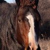 Bad Hair Day, Wild horse, TRNP