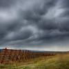 Storm sky & windbreak
