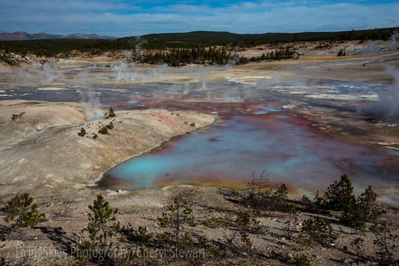 Norris Geyser Basin  -  YNP