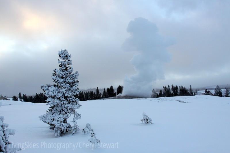 Sunrise at Ol' Faithful, Yellowstone Park