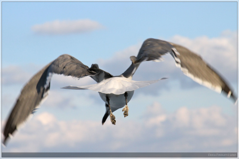 I was going through my beach photos, and this one made me laugh...not the usual angle on a sea gull! :)