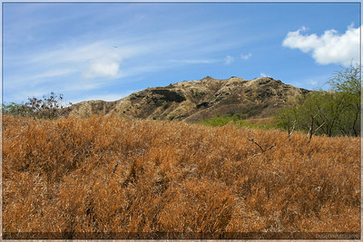 Everything was very dry inside the bowl of the Diamond Head crater.  It was hard to think that we were in hawaii.