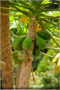Some Papayas.