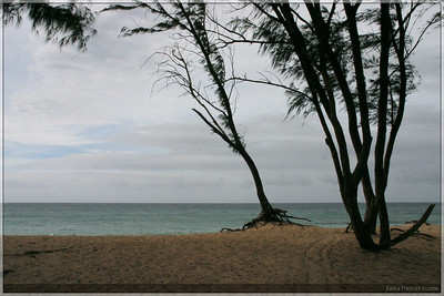 I don't remember the name of this beach, but it was located on the North Shore just west of Paia