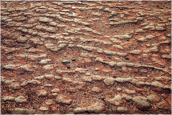 I tend to be easily fascinated by textures.  This is a picture of the ground at one of the beaches...I thought it looked neat! :)