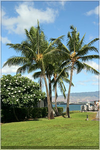 I continued to be fascinated by the many palm trees that were found on Hawaii.