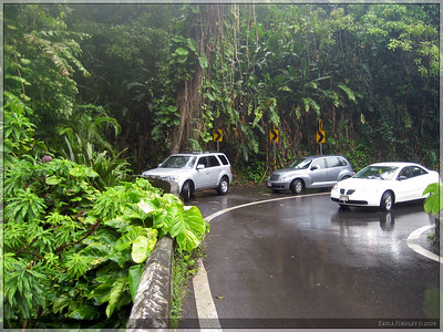 A quick shot of the road.  We were smack dab in the middle of a rain forest for most of the drive.  The foliage was beautiful.