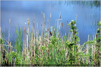 A bird in the weeds.