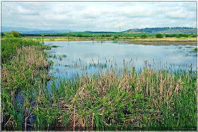 This was the Wetland Bank Site that we visited on our field trip.  It was located about an hour south of Portland.  The scenery was very beautiful.