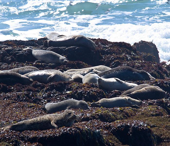 Fitzgerald Marine Reserve Moss Beach, CA