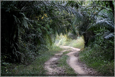 A tropical shady road where we walked.
