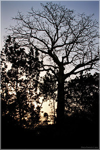 I loved the tree silhouettes against the sky. Even the bare branches look like foreign trees!
