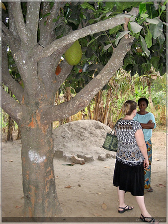 Christal and Patience talking under the Jack Fruit tree
