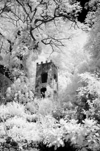 St: Kitts:  Grounds of Romney Manor (Infrared)