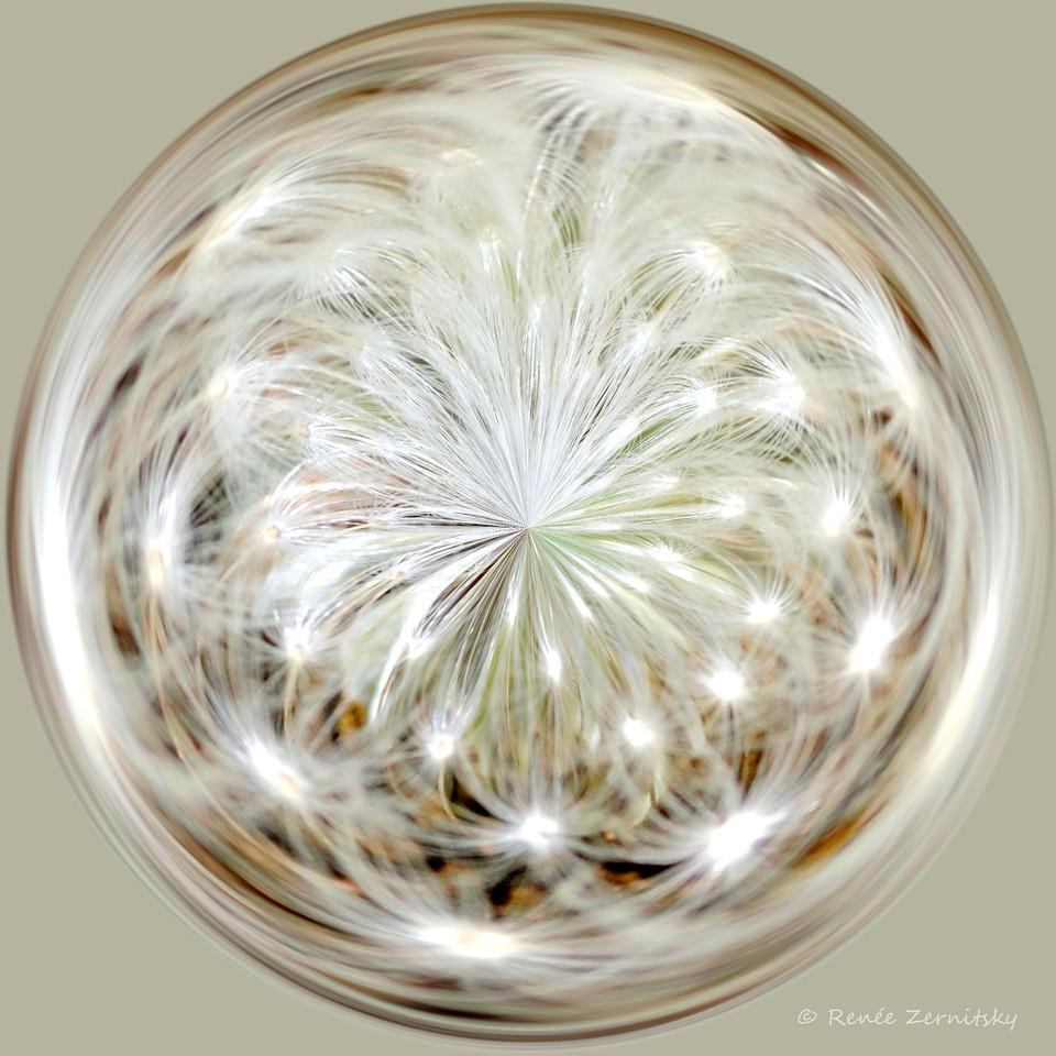 Dandelion Seed Pod Polarized