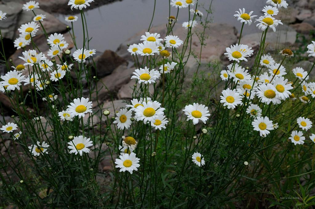 Creek side Garden