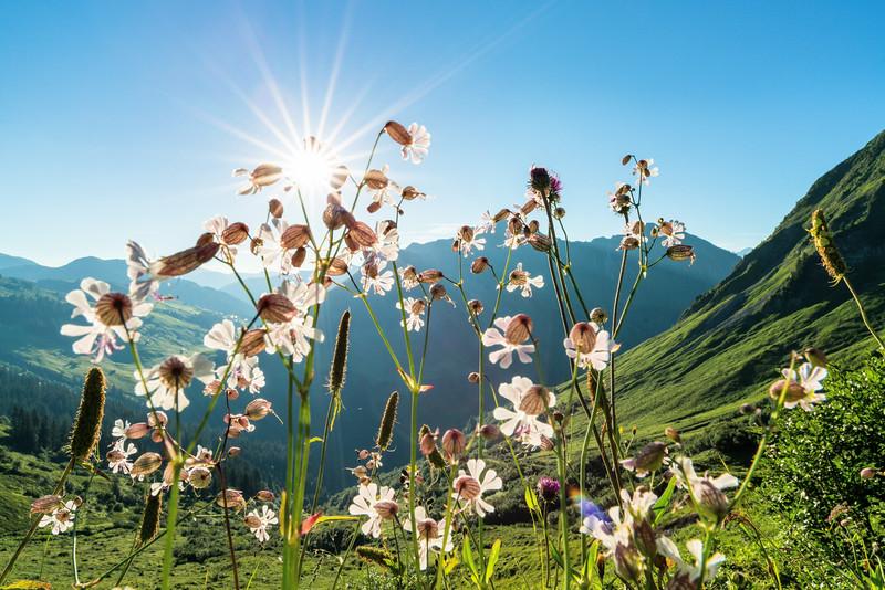 Furkajoch mt Blick in den Bregenzer Wald