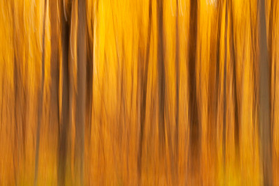 Fall abstract, Morton Arboretum, Illinois