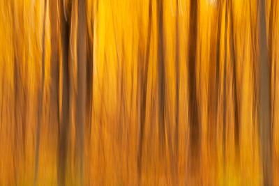 Fall abstract, Morton Arboretum, Illinois