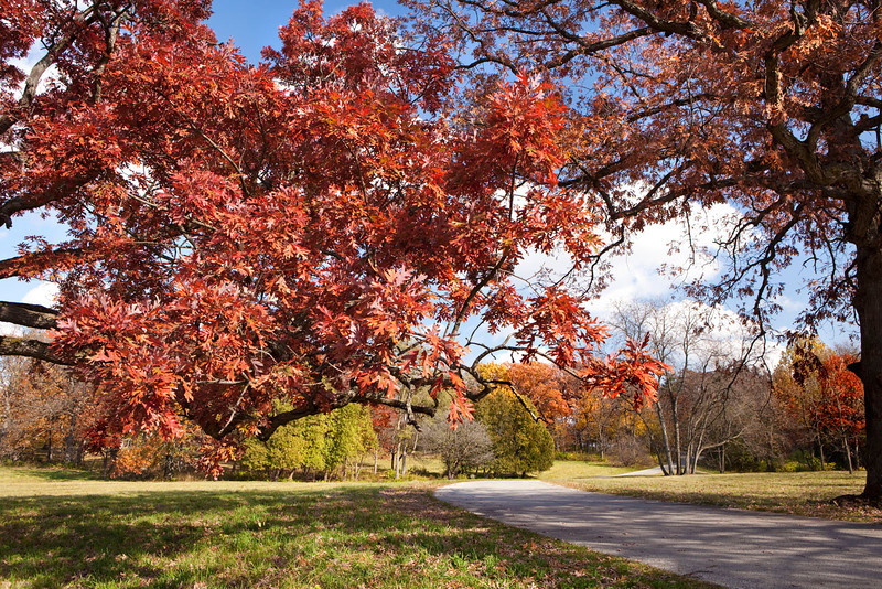 Magnificent Oaks 1, Illinois