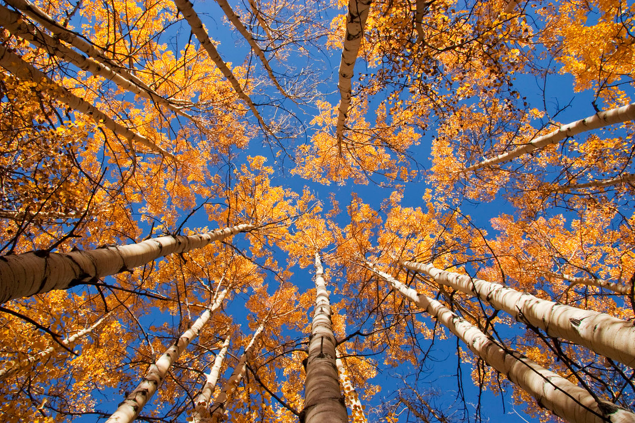 Aspen Canopy, Colorado