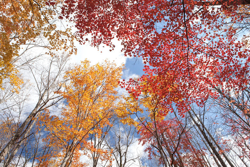 Colorful tree canopy 2