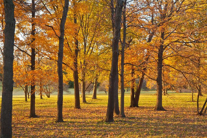 Golden evening light 2, Morton Arboretum, Lisle, IL