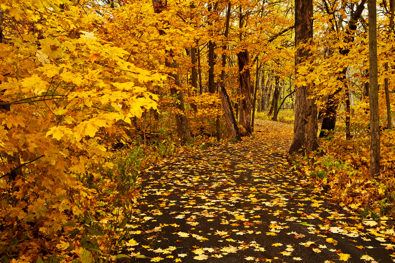 Fall color walkway, Fullersburg Woods, Illinois