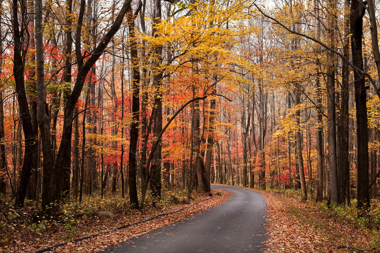 Fall Scenic Drive 1, Great Smoky Mountains, Tennessee