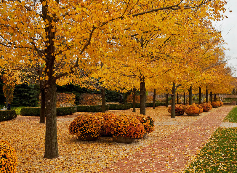 Fall walkway, Chicago Botanic Garden, Illinois