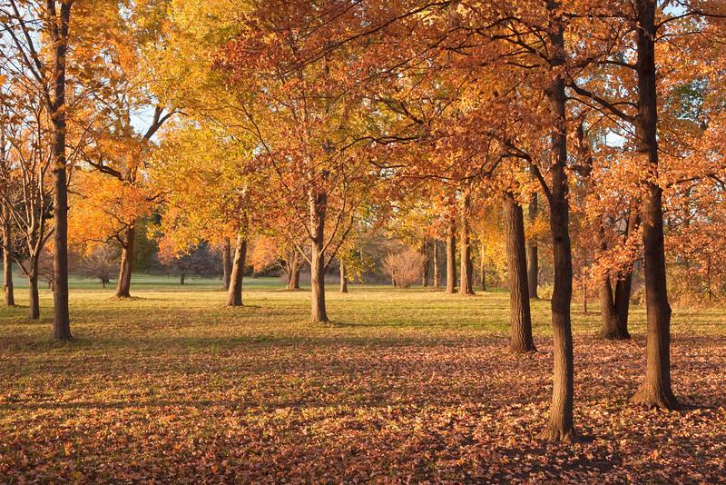 Golden evening light 1, Morton Arboretum, Lisle, IL