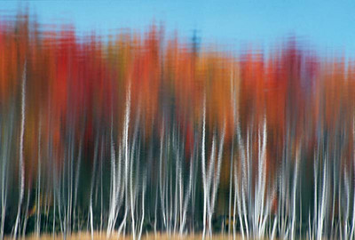 Impressionistic trees, Michigan