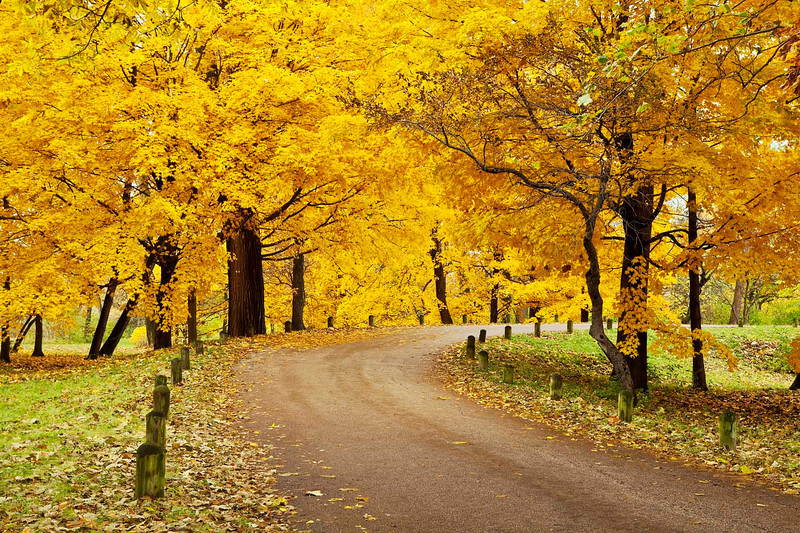 Fall drive, Morton Arboretum, Illinois