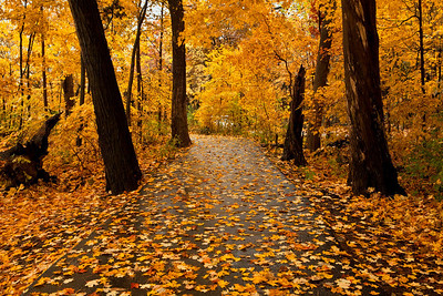 Golden walkway, Fullersburg Woods, Illinois